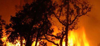 Prévention des incendies de forêt